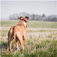 Dogtrace Výcvikový obojek d-control 1600 - Obojek pro psy