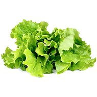 Click and Grow Hlávkový salát - Sazenice