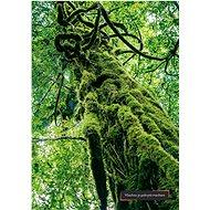 Dominika na cestě Japonskem - Elektronická kniha