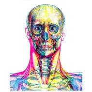 Hravá anatomie: Posviť si na lidské tělo - Kniha