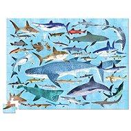 Puzzle tubus - 36 Žraloků (100 ks) - Puzzle