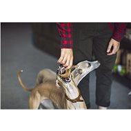 Paroh Daněk L - Paroží pro psy