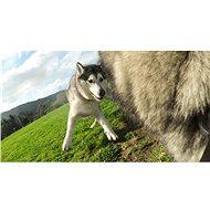 GOPRO Fetch (psí postroj) - Držák
