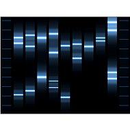 Genoportrét – obraz Vaší jedinečnosti v DNA. Varianta Single (1 osoba), vel. XXL (1000 x 700 mm) - Voucher:
