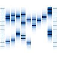 Genoportrét – obraz Vaší jedinečnosti v DNA. Varianta Single (1 osoba), vel. XXXL (1,5 x 1 m) - Voucher: