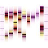 Genoportrét – obraz Vaší jedinečnosti v DNA. Varianta Duo (2 osoby), vel. XXL (1000 x 700 mm) - Voucher: