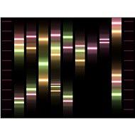 Genoportrét – obraz Vaší jedinečnosti v DNA. Varianta Duo (zobrazeny 2 osoby), vel. XXXL (1,5x1 m) - Voucher: