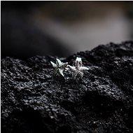 HOT DIAMONDS Daisy DE604 (Ag 925/1000, 0,90 g) - Náušnice