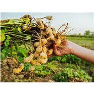 Bery Jones Arašídy ve Wasabi 1kg - Ořechy