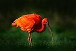 Fotografování zvířat v ZOO, vše co potřebujete vědět