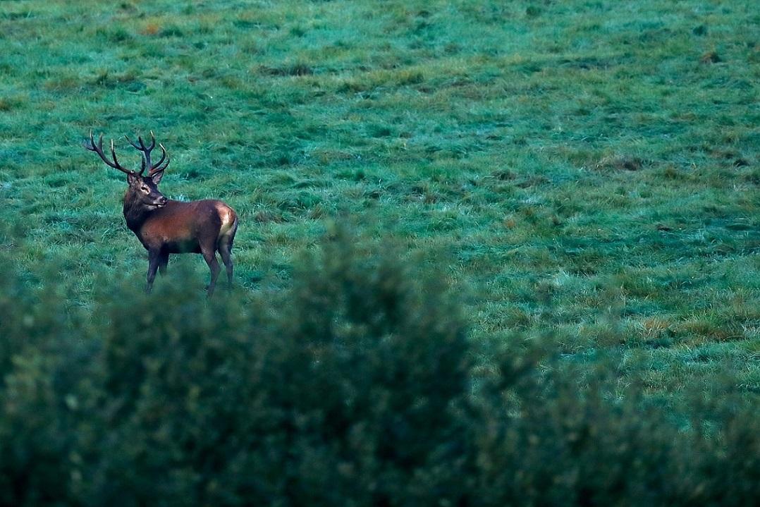 Canon EOS 5D Mark II, wildlife fotografie