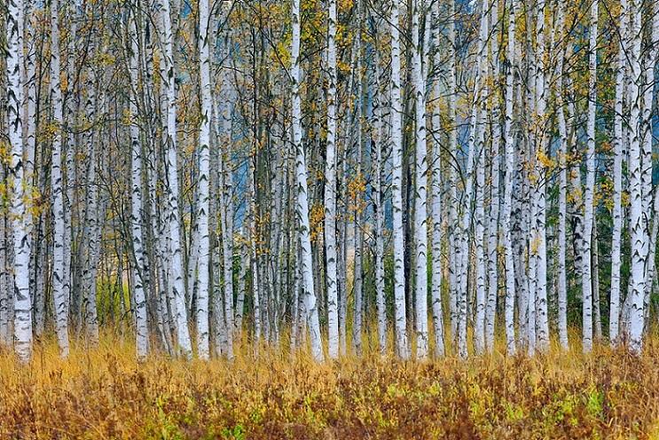 Canon EOS 5D IV Mark, krajina, podzimní fotografie