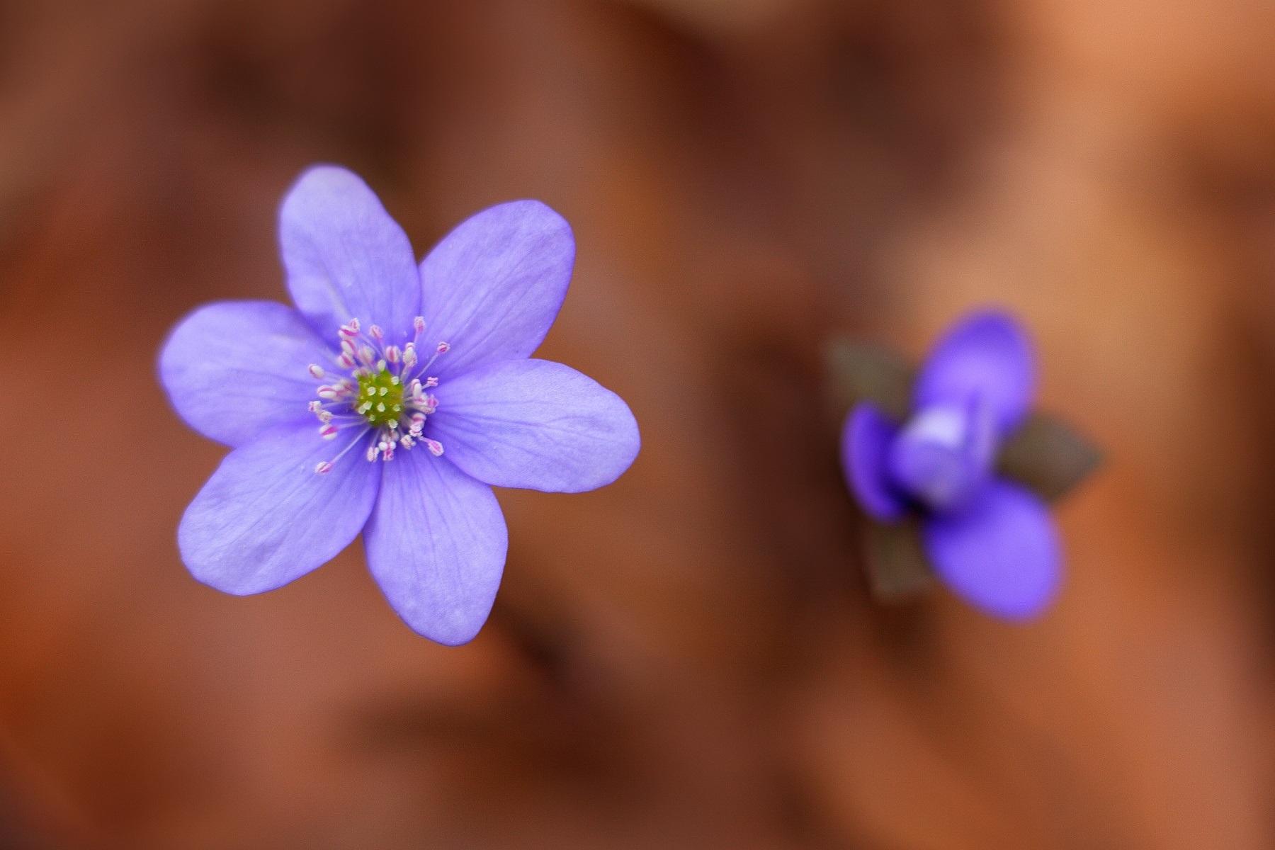 Fotografie pořízena objektivem Canon EF 50 mm f/1.8 STM