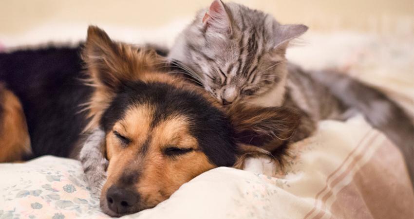 antiparazitika; ochrana proti blechám; přípravky proti blechám; pes; kočka; domácnost