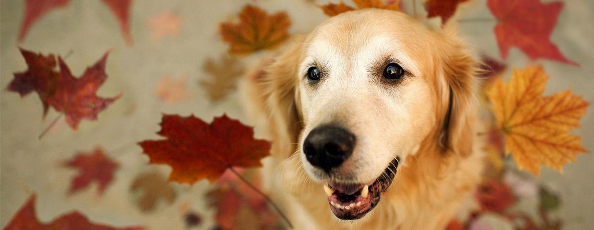antiparazitika; ochrana proti blechám; přípravky proti blechám; pes; podzim