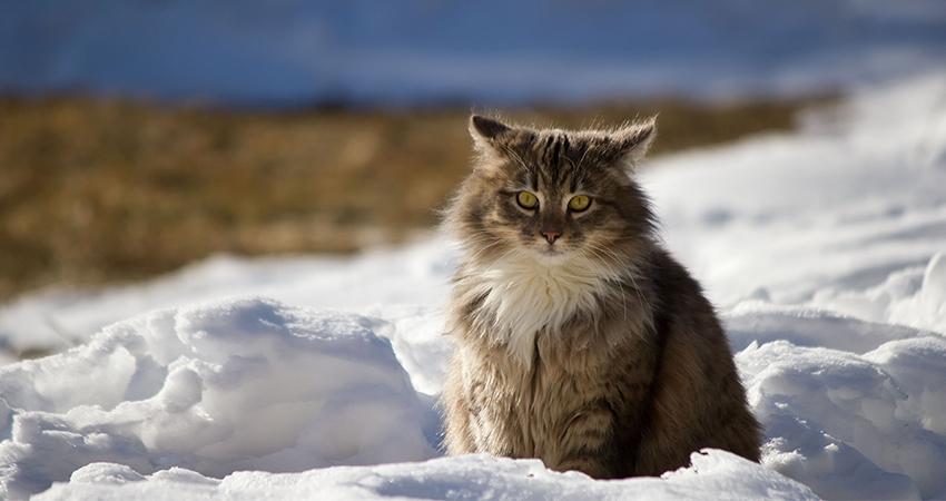 antiparazitika; ochrana proti blechám; přípravky proti blechám; kočka; zima