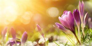 https://cdn.alza.cz/Foto/ImgGalery/Image/Article/brezen-na-zahrade.jpg