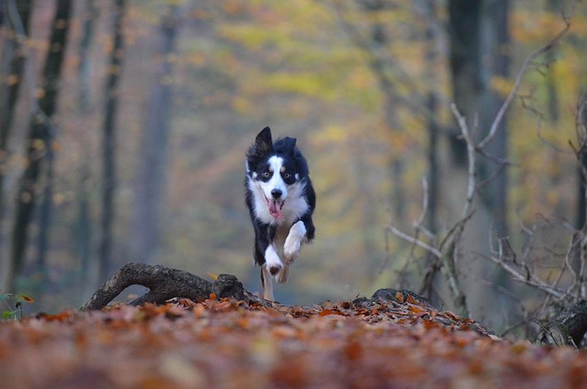 Jak vyndat klíště psovi