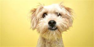 Jak správně krmit štěně, dospělého psa a staršího psa?