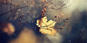 https://cdn.alza.cz/Foto/ImgGalery/Image/Article/listopad-na-zahrade_2.jpg