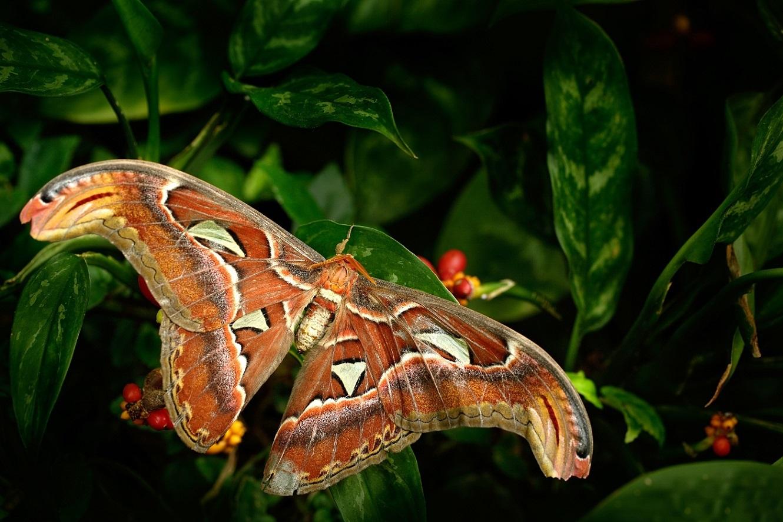 Makro fotografie; Ondrej Prosicky; Fata Morgana; motýl