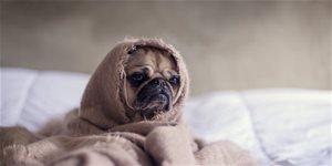 https://cdn.alza.cz/Foto/ImgGalery/Image/Article/photo-dog-stress.jpg