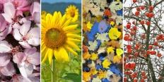 https://cdn.alza.cz/Foto/ImgGalery/Image/Article/zahradni-kalendar-nahled.jpg