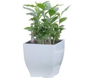 Samozavlažovací květináč