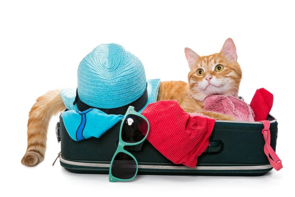 Na dovolenou i s našimi zvířecími mazlíčky