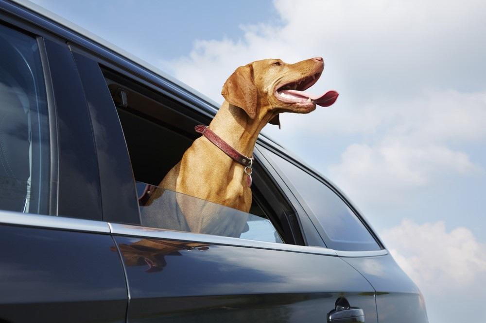 Pes v autě aneb Jak cestovat bezpečně se zvířetem