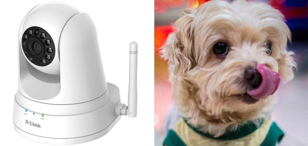 D-Link - ochrana domácích mazlíčků