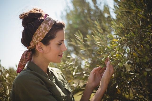 Olivy jako zdroj vlasové výživy