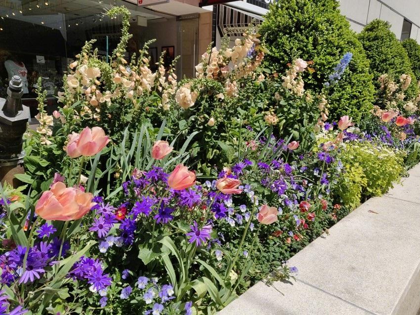 OnePlus 6 Fotka - květiny