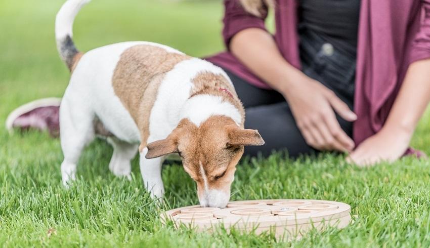 dívka; pes; psí hlavolam; doglog