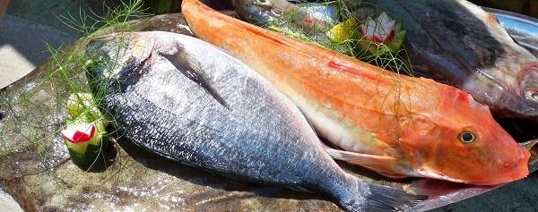 Rybaření;, Chorvatsko; úlovek; ryby