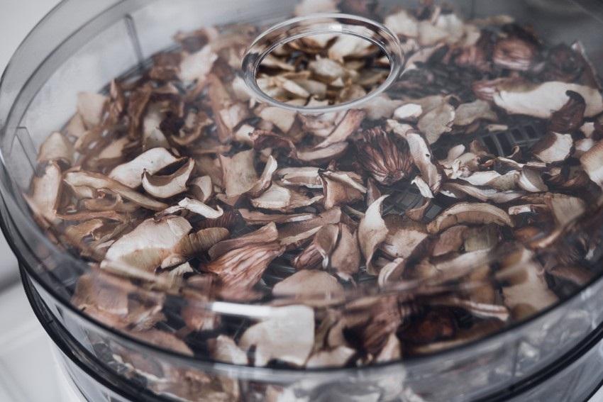Sušení hub pomocí sušičky
