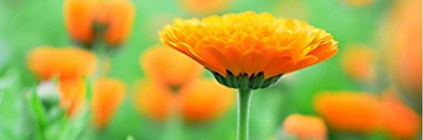 Vlastní zahrady tvoří srdce společnosti Weleda