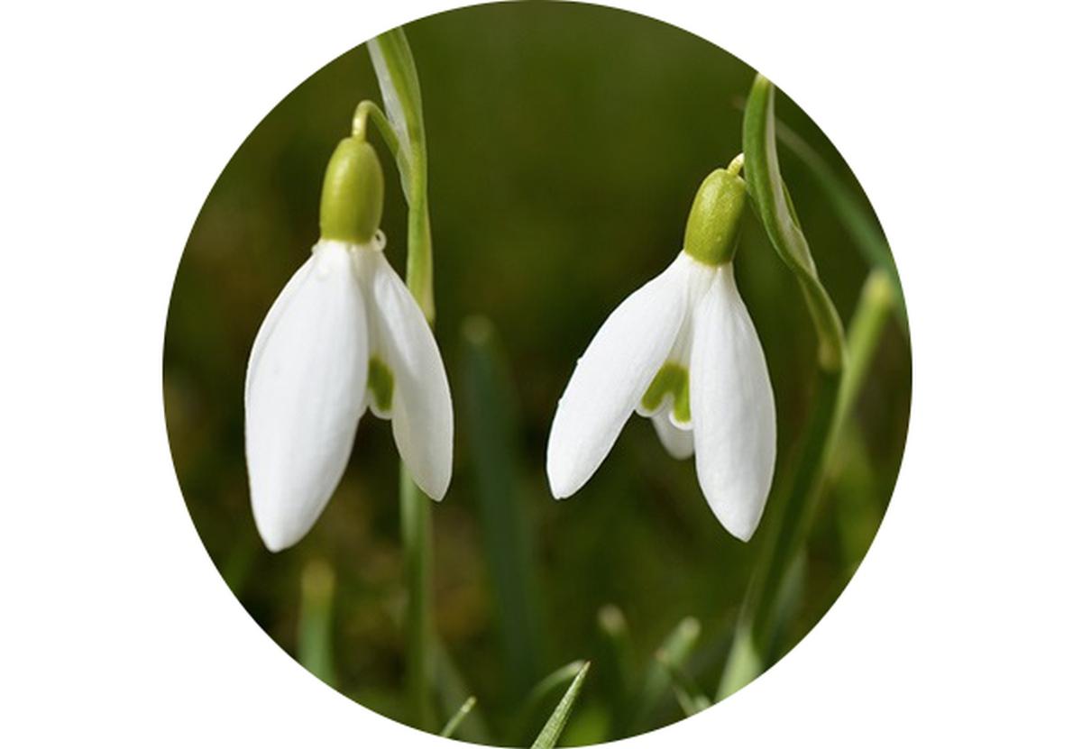 Zahradní kalendář: Březen na zahradě