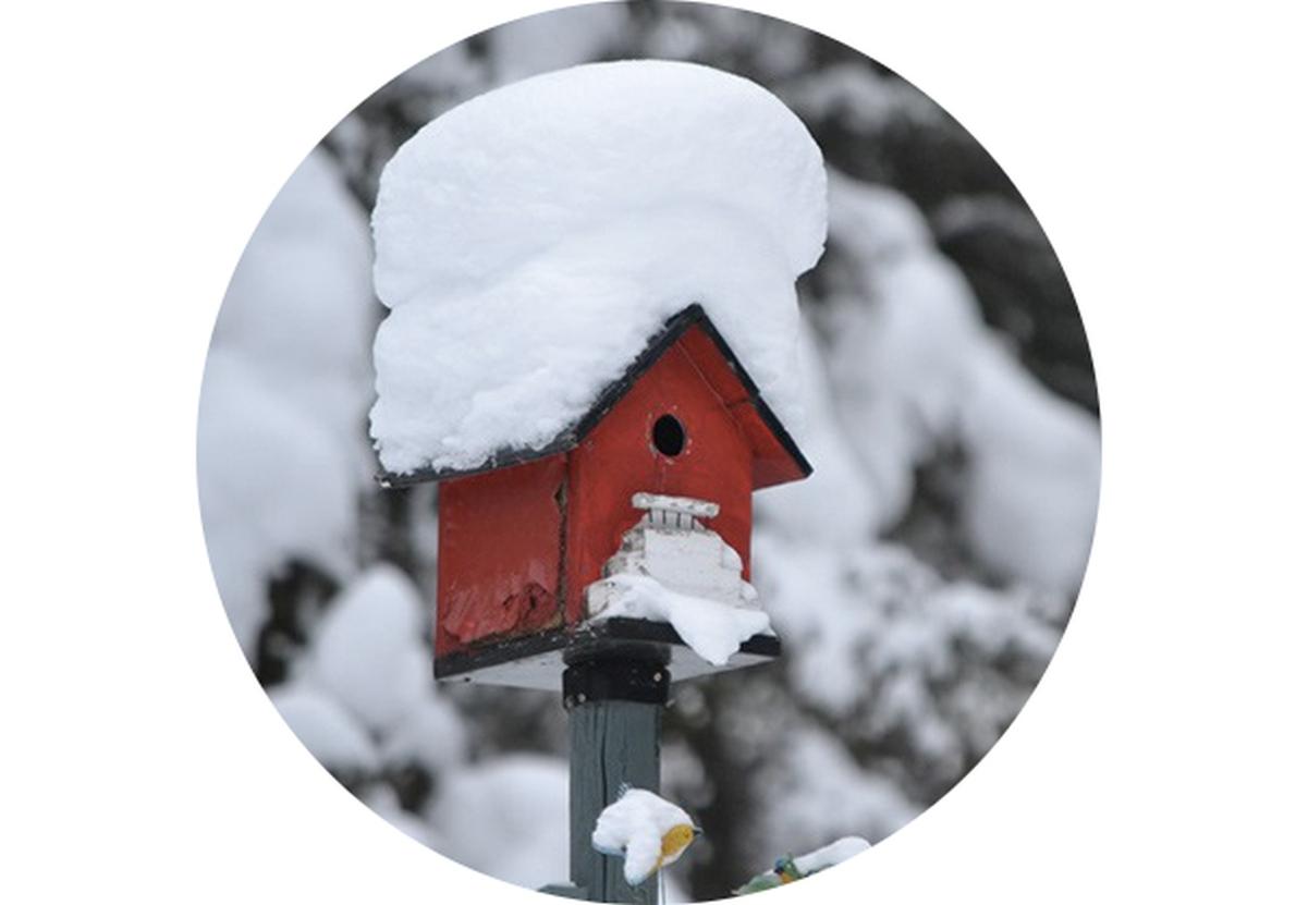 Zahradní kalendář: Leden na zahradě