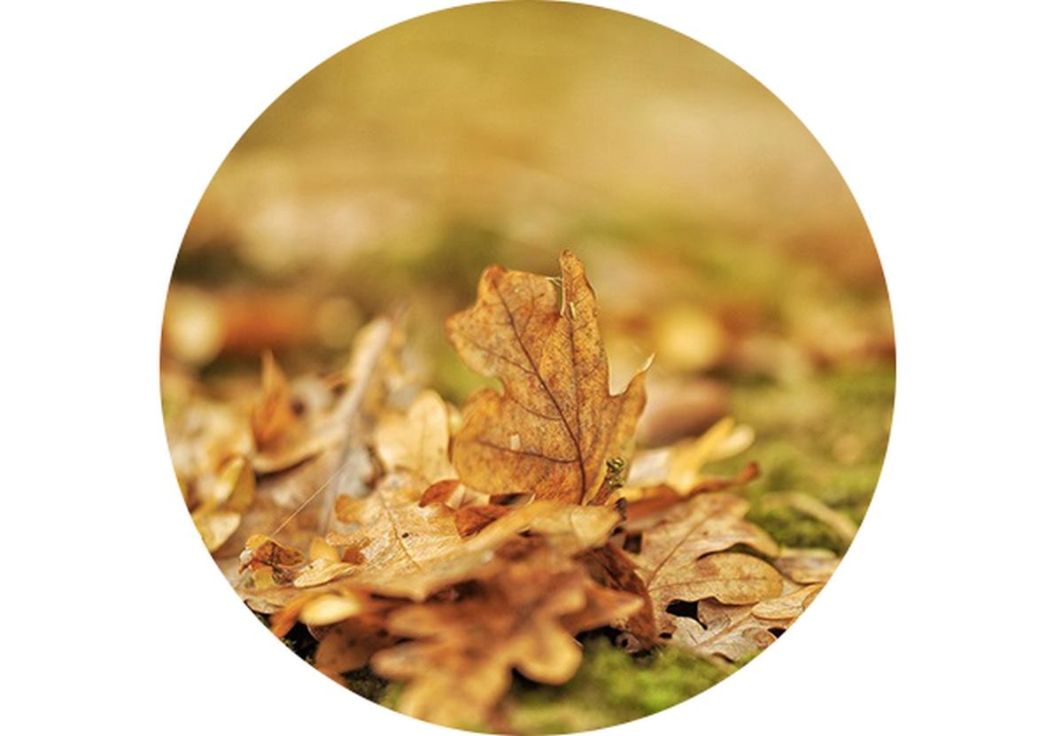 Zahradní kalendář: Listopad na zahradě