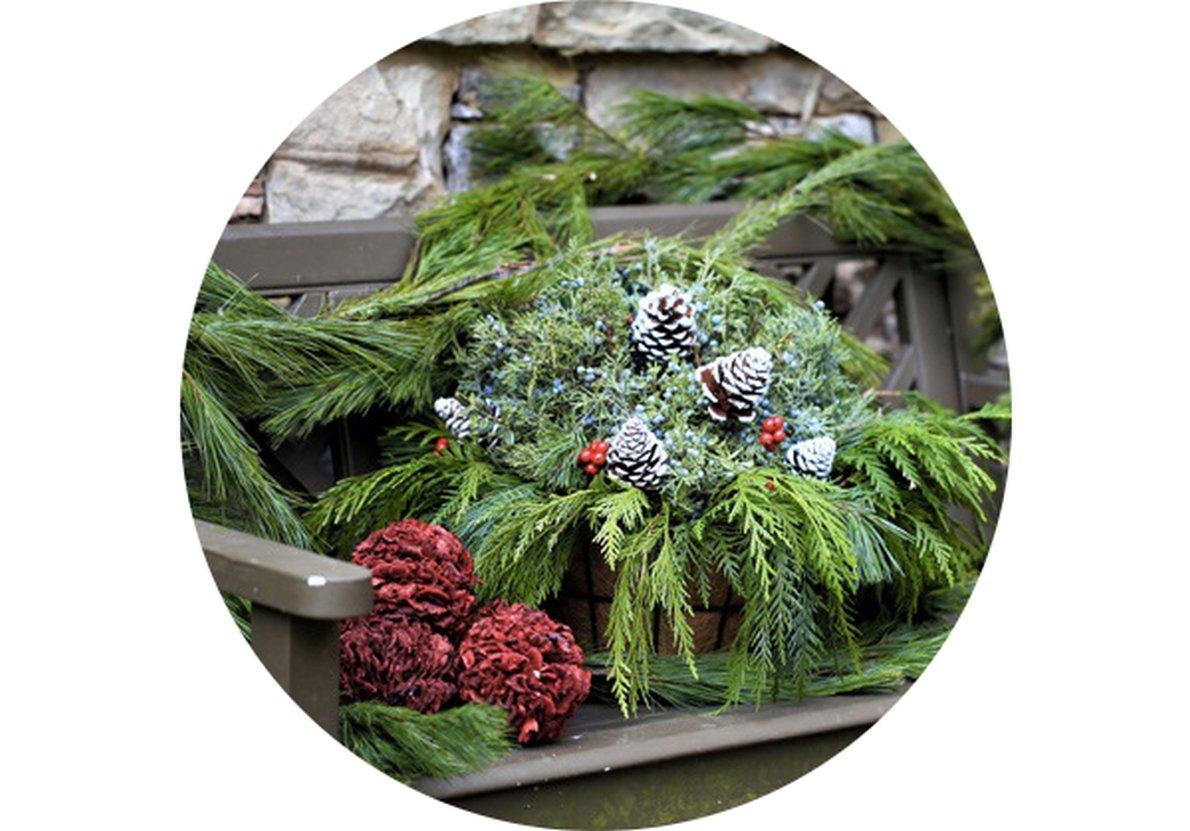 Zahradní kalendář: Prosinec na zahradě