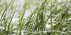 https://cdn.alza.cz/Foto/ImgGalery/Image/zahradni-kalendar-unor-nahled.jpg