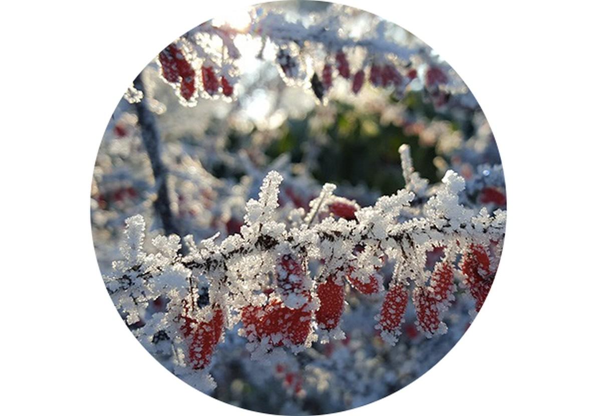 Zahradní kalendář: Únor na zahradě