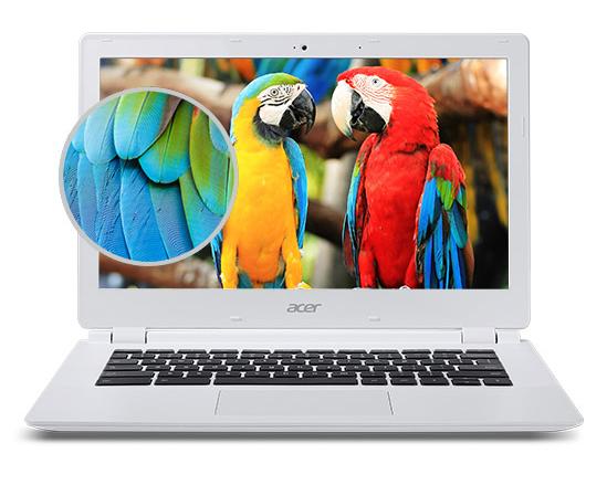 Displej s papoušky + detail