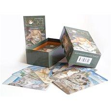 Kouzelný kočičí tarot: kniha a 78 karet - Kniha