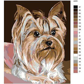 Malování podle čísel - Jorkšírka 40x50 cm bez rámu a bez vypnutí plátna - Malování podle čísel