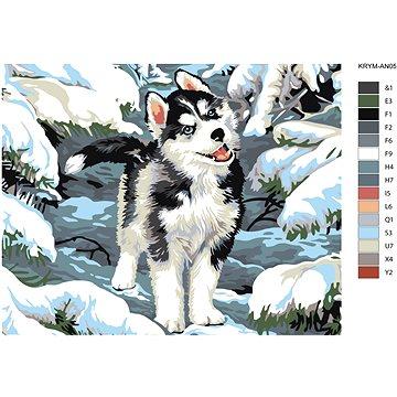 Malování podle čísel - Malý husky 40x50 cm bez rámu a bez vypnutí plátna - Malování podle čísel