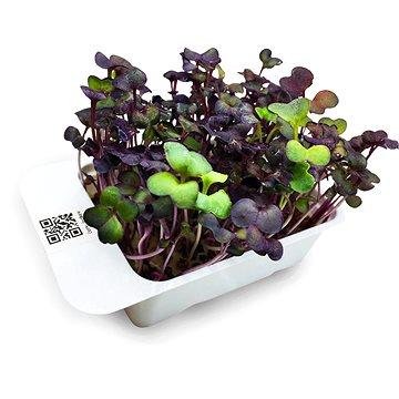 Microgreens by Leaf Learn červená ředkev - Sazenice