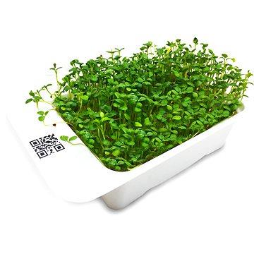 Microgreens by Leaf Learn jetel - Sazenice