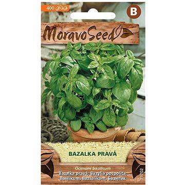 Bazalka pravá, zelená - Semena